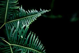 Free Picture Leaf Nature Fern Free Image On Pixabay Dew Fern Green Leaf Nature Fern And Leaves