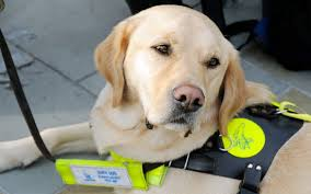 Blind Dog And His Guide Dog Two Cab Drivers Guilty Of Refusing To Pick Up Blind Man And Guide