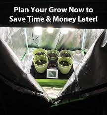 which room in the house is best for growing weed grow weed easy where is the best place in your house to grow your very own cannabis garden