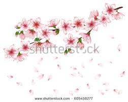vector japanese cherry blossom tree stock vector 605458277