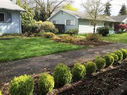 home design eugene oregon before and after residential landscape cleanup in eugene oregon