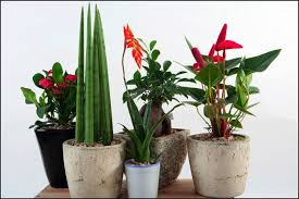 Creative Vase Ideas Garden Making Decorations House Plants Design Ideas Small Leafs