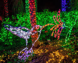 Botanical Gardens Christmas Lights by Free Images Forest Branch Flower Jungle Holiday Colorful