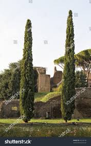 two pine trees before palatine rome stock photo 44120170