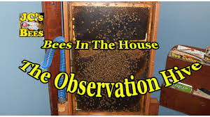 bees in the house the observation hive youtube