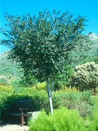 recommended indigenous trees for pools part three random