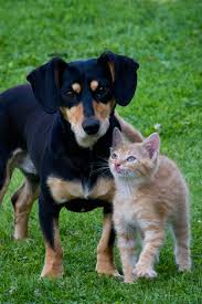 cat and dog free stock photo public domain pictures