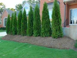 tall backyard privacy ideas home outdoor decoration