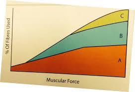 btec level 2 sport muscular system proprofs quiz