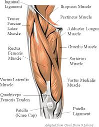 Knees Anatomy Top 8 Exercises To Build The Body Of A Greek God Muscle Anatomy