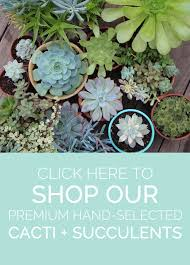 Plants That Dont Need Sunlight by Tips For Growing Healthy Succulents U2014 Needles Leaves