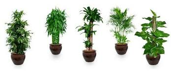 plants for office office cleaning why your office needs air purifying plants