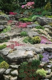 Rock Garden Cground Alpine Rock Garden With Low Growing Ground Cover And Perennials