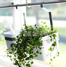 Rail Hanging Planters by Window Box Inspo 12 Ideas For Space Saving Planters Brit Co