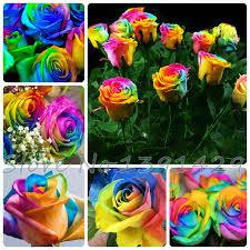 Cheap Flower Seeds - free shipping 100 seeds rare holland rainbow rose flower lover