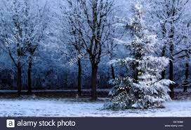 frosty tree beside forest with white lights and blue