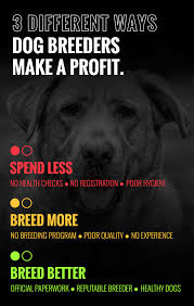 is dog breeding profitable the actual truth