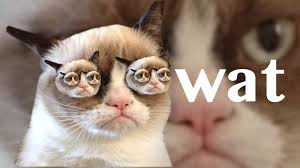 Angry Cat No Meme - my second grumpy cat wallpaper imgur