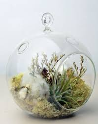 16 best 12 days of air plants images on pinterest plant design