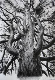 76 best pencil drawing of trees images on drawing