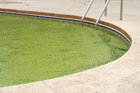 defeating pool algae swim university tori pool com pool