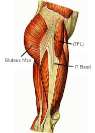 Back Knee Anatomy Knee Pain I Bet It U0027s Your It Band Deansomerset Com