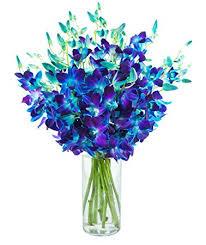 Blue Orchid Flower - amazon com kabloom exotic blue sapphire orchids 20 fresh blue
