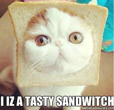 Cutest Memes - one of the cutest cat memes ever memecommunity com