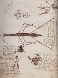 robert hooke et al ilustración científica pinterest natural