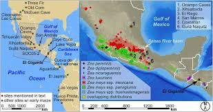 Mesoamerica Map High Precision Chronology For Central American Maize