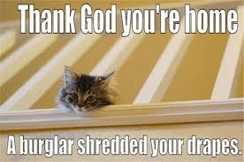 Lol Cat Meme - 31 most funny lol pictures and images