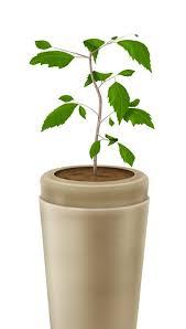 bios tree urn bios tree urn cremation ashes