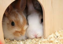 rabbit rabbit march rabbit rabbit n tiny