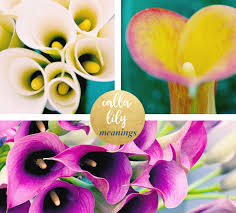 Lilly Flowers Calla Lily Meaning And Symbolism Ftd Com