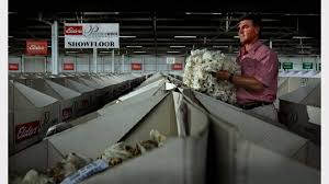gallery last wool sales in newcastle newcastle herald
