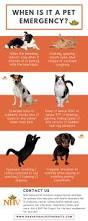 best 25 pet infographic ideas on pinterest cat health happy