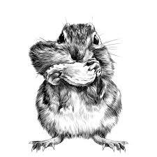 chipmunk sketch vector color picture stock vector image 89968176
