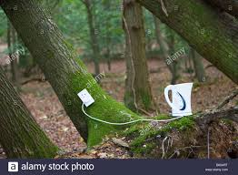 electrical outlet and kettle on tree in forest stock photo
