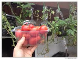 decoration avec des pots en terre cuite transformer des gobelets en plastique en pot à semis à très bas