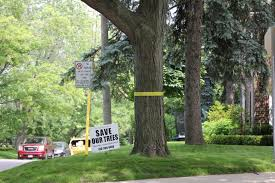 park residents fight potential removal of 349 trees