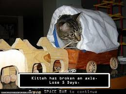What Is An Exle Of A Meme - kitten has broken an axle lose 5 days the oregon trail know