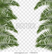 web summer banner green palm vector u0026 photo bigstock