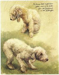 bedlington terrier vintage prints gifts and artwork from