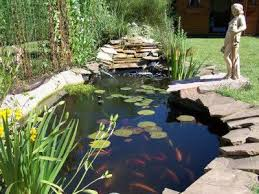 Backyard Bassin - 7 best bassin images on pinterest backyard ponds home and koi ponds