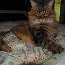 Funny Cat Memes Tumblr - inspirational cat memes tumblr funny cat memes tumblr wild animal