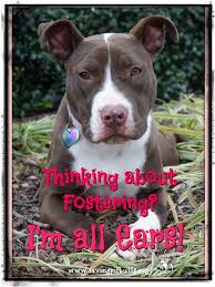 9 best friends to the forlorn pitbull rescue adoptable dogs