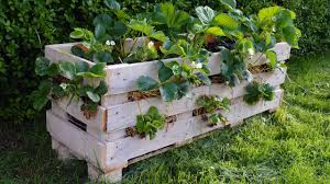 how to make a better strawberry pallet planter youtube