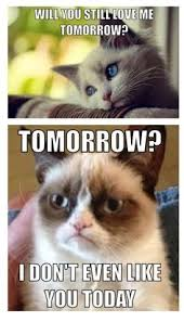 Sad Kitty Meme - resultado de imagen para grumpy cat meme grumpy cat pinterest