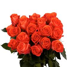 100 Roses Globalrose Fresh Salmon Color Roses 100 Stems Wow 100 Roses
