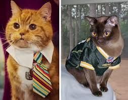 Halloween Costume Cats Cat Halloween Costumes Safe Trupanion